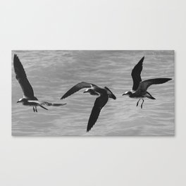 Flight Transitions Canvas Print