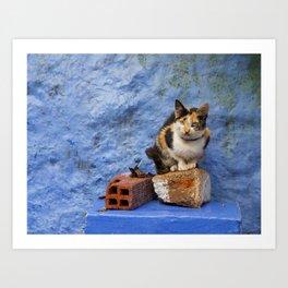 Cat on Blue Wall Art Print