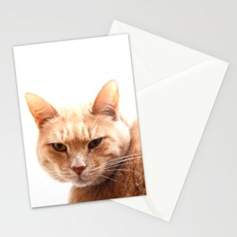 Red cat watching Stationery Cards