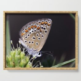 Spotted Butterfly 1 Serving Tray