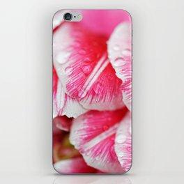 Raindrops on pink tulip petals iPhone Skin