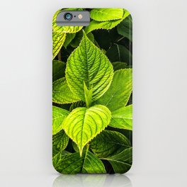 Light Green Leafs  iPhone Case