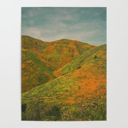 California Poppies 020 Poster
