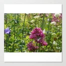French Flowers Canvas Print