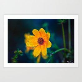 5 AM Flower.... Art Print