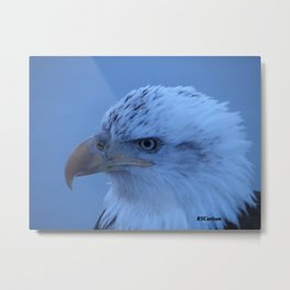 Young Eagle in Failing Light Metal Print