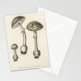 Amanita muscaria var  from Medical Botany (1836) by John Stephenson and James Morss Churchill Stationery Cards
