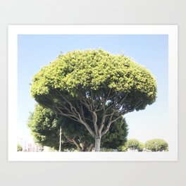 all the trees in los angeles, cropped Art Print