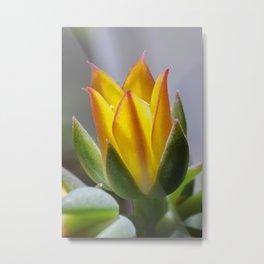 Firey succulent flower Metal Print
