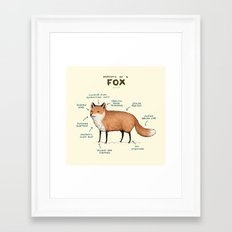Anatomy of a Fox Framed Art Print