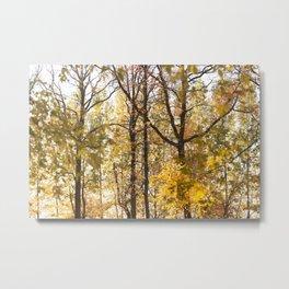 Autumn Forest 26 Metal Print