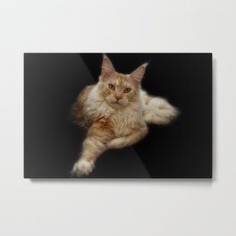 Maine Coon Lady Metal Print