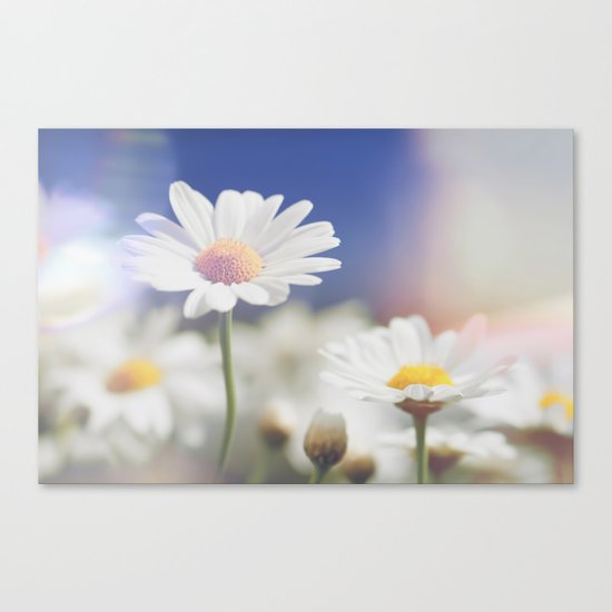 Meadow of daisies Canvas Print