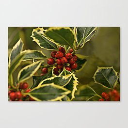 Christmas Holly with Red Berries Canvas Print