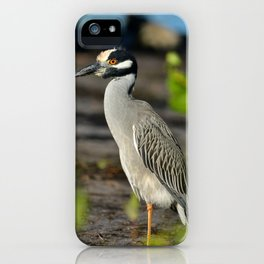 Yellow Crown Night Heron iPhone Case