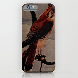 Vintage Print - Birds and Nature (1906) - American Sparrowhawk iPhone Case