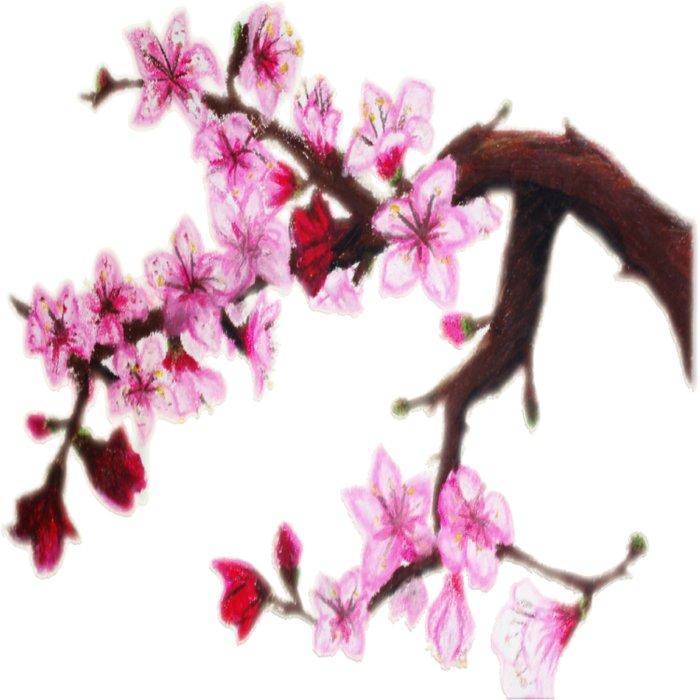 Cerezo en flor Duvet Cover