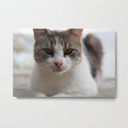 stray cat III Metal Print