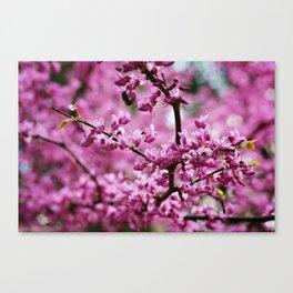 SC Clemson Botanical Gardens Canvas Print
