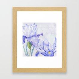 Watercolor Iris Framed Art Print