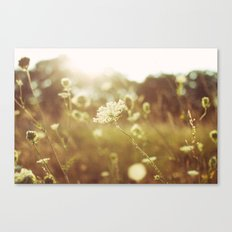 summers light Canvas Print