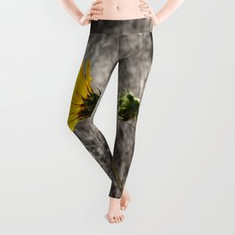 Sunflower Daydream Leggings