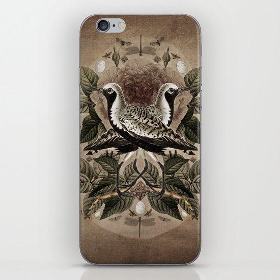 Pluvialis squatarola iPhone & iPod Skin
