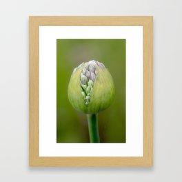 Flower bud Framed Art Print