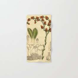 Echeveria setosa 'Mexican Firecracker' 1918 Hand & Bath Towel