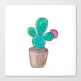 Little Cactus Canvas Print