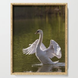Mute swan swims in the river waters spreading its large wings Serving Tray