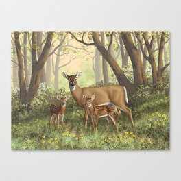 Whitetail Doe and Cute Twin Fawns Canvas Print