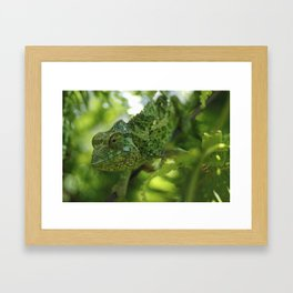 Animal Planet on the Islands of Hawaii Framed Art Print