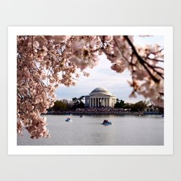 Cherry Blossoms of DC Art Print