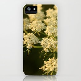 Queen Anne's Lace Flower iPhone Case