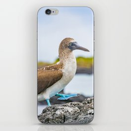 Blue-footed booby Galapagos bird iPhone Skin