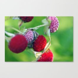 Thimbleberries. Canvas Print
