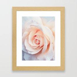 Flowers Photography   Rose   Spring   Easter   Blush Pink Framed Art Print