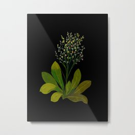 Statice Limonium Mary Delany Floral Flower Paper Collage Delicate Vintage Black Background Botanical Metal Print