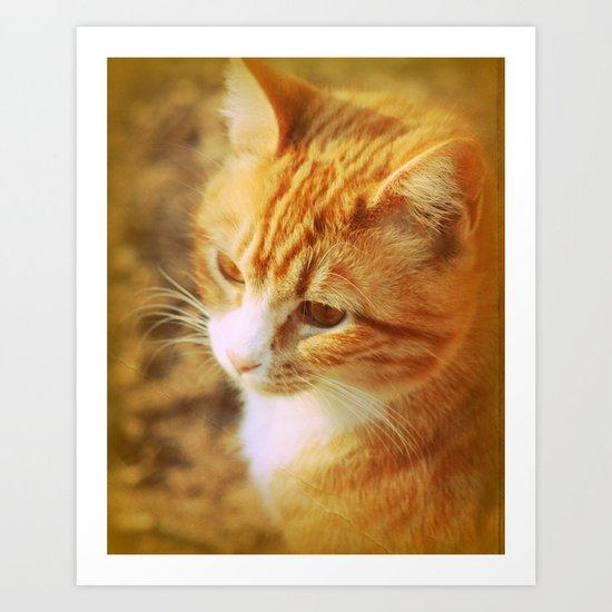Creamsicle Cat Art Print