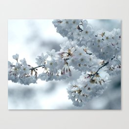 COOL BLOSSOMS Canvas Print