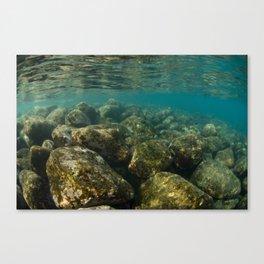 Faune aquatique sur roche volcanique Canvas Print