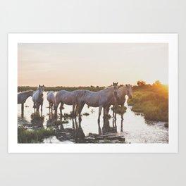 Camargue Horses VI Art Print
