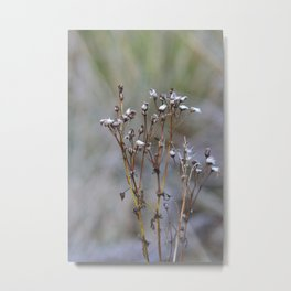 Frosty Seeds Metal Print