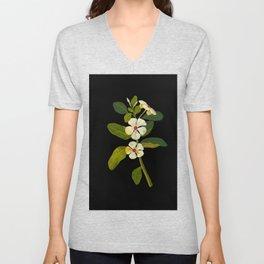 Mary Delany Vinca Rosea Vintage Botanical Art Black Background Realistic Floral Arrangement Unisex V-Neck
