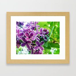 Lilac Love Framed Art Print