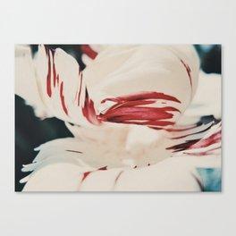 Striped Petals Canvas Print
