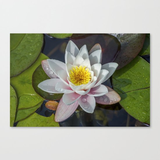 Summer Lily Canvas Print