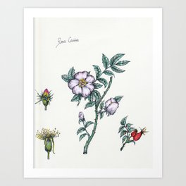 Plants & Herbs Edition Art Print