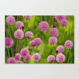 Bumble Bees on Pink Chives Canvas Print
